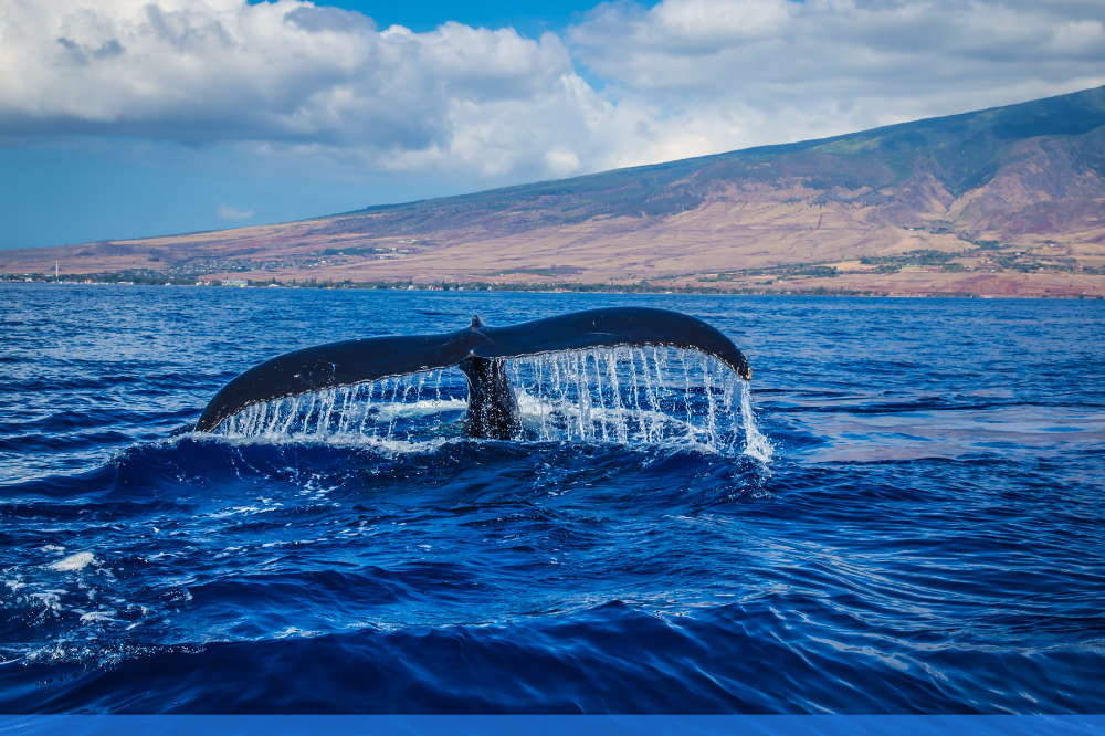 Close up view of whale tail coming out of water